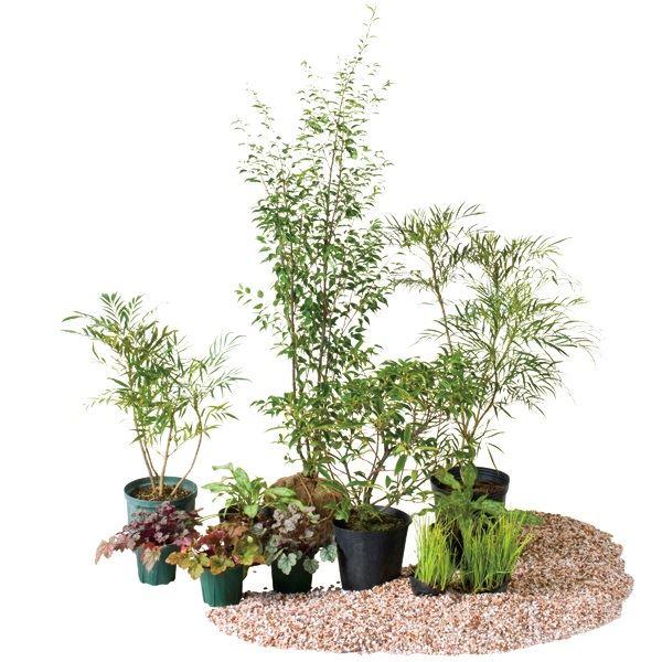 オンリーワン 目的で選ぶ 植栽セット シェード ハイノキ 日陰用 YE6-SET05