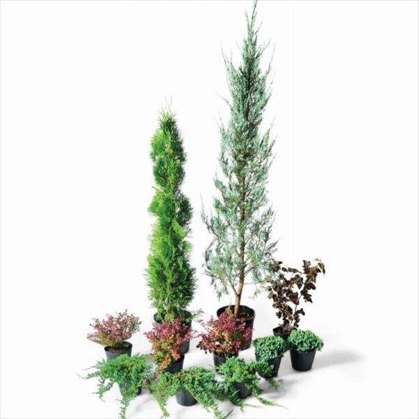 オンリーワン 目的で選ぶ 植栽セット イージー ブルーヘブン お手入れ簡単 ME6-SET03