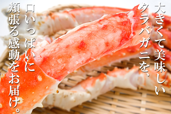 King crab leg approx  800 g extra large or shoulder leg boiled King crab  crab extract after soon eat King crab popular seafood