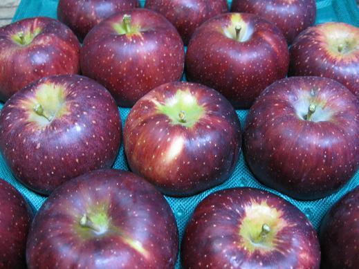 信州中野市で誕生した9~10月収穫の黒系リンゴ 色も食味も濃いりんごと言えば秋映です 2021年産 信州産 秋映 日本未発売 あきばえ 訳あり自家用ランク約4.7~5kg 送料無料 送料無料お手入れ要らず 信州中野市で誕生した甘さと酸味のバランスがGoodなりんご 販売時期9月下旬~10月中旬,只今予約受付中 一部地域は有料 収穫 10~20玉
