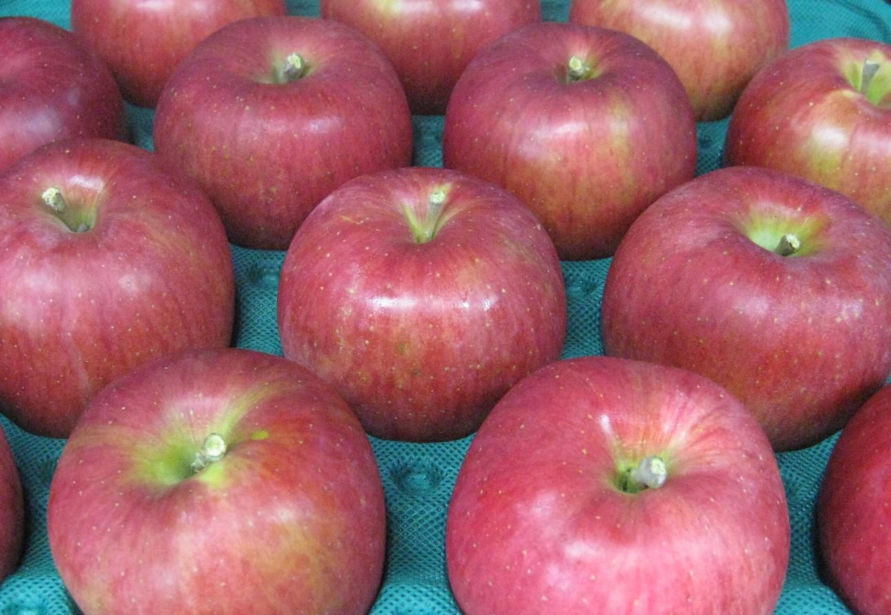 至上 セットアップ 信州の生んだ甘~いりんごの決定版 自家用に好適なシナノスイートです 訳ありリンゴ 信州で誕生した甘くジューシーなりんご シナノスイート 自家用ランク約4.5~5kg 10~20玉 送料無料 一部地域は有料 発送は10月中旬から順次発送予定 収穫