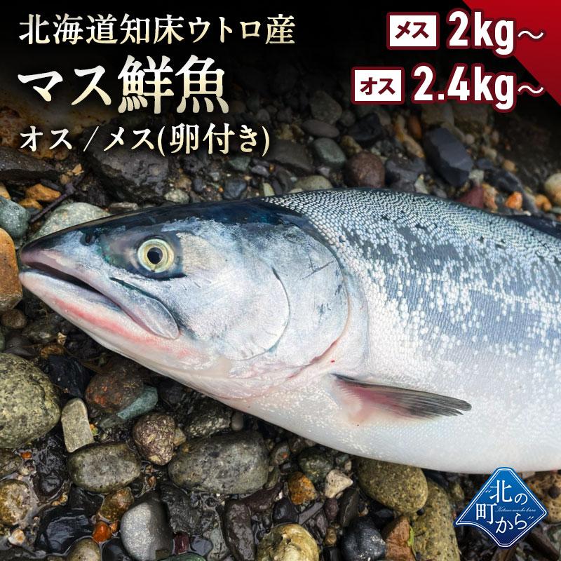北海道知床ウトロ産の脂が乗った新鮮なマス鮮魚 より脂が乗っているオスと 卵付きメスの2種類が選べます 解体済が希望の方へ便利なカットサービスもご用意しました マス鮮魚 北海道 知床 羅臼産 オス2.4kg以上 メス卵付き2kg以上 着日指定不可 直送 鱒 水揚げ次第発送 同梱 ます とれたてを新鮮なうちに発送 980円 期間限定特価品 限定Special Price メスの場合4