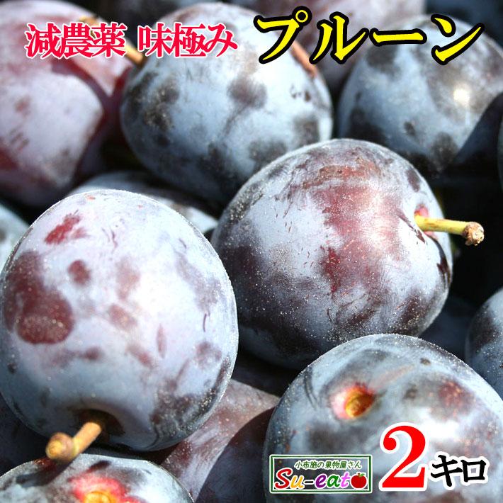 安値 WEB限定 栄養満点 パクパク食べよう 生プルーン くらしま 長野県産 レビューを書いたら200円クーポン 減農薬 2キロ