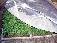 【取寄品】シルバーホッカ 2.7×25m水稲育苗用保温シート