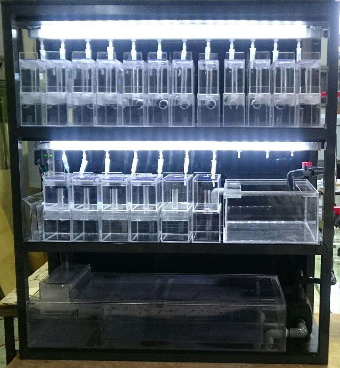 ブリーディングシステム水槽 Cタイプ 水槽37本(BS-C)【受注生産】【送料無料(一部地域を除く)】繁殖・研究・観察・ブリード・アクリル水槽