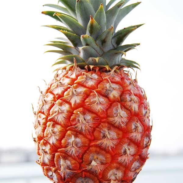 【送料無料】石垣島産ピーチパイン Sサイズ(700g~1kg) 3個入り 大城農園【沖縄県産 パイナップル ピーチパイン】