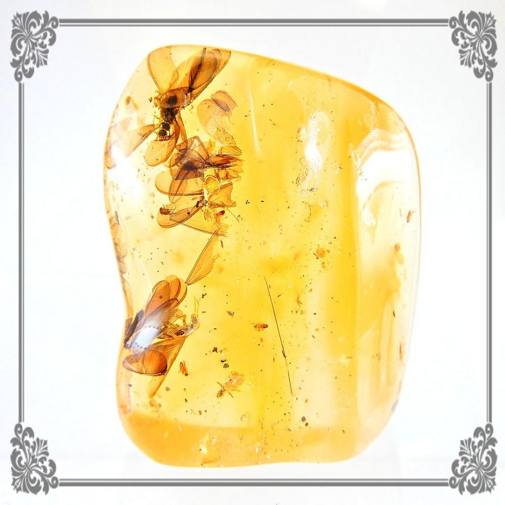 虫入り琥珀 原石 ルース コーパル イエローアンバー 羽蟻 ハエ 蜂 チャテムシ 【一点物】