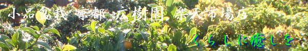 小品盆栽 京都 広樹園 楽天市場店:京都に実店舗を構える小品盆栽専門店です。