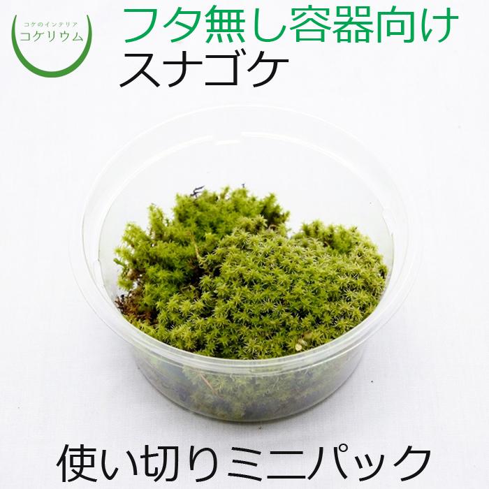 星砂のような葉がかわいく特徴的です。美しい緑色のマットが作れるので、ホソバオキナゴケ同様レイアウトに使いやすい種類です。  スナゴケ ミニ - nutranuggets.it