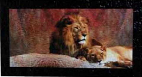 イタリア製アートフレーム (ライオン) 額絵 アート115×65×4  9kg 10P27May16