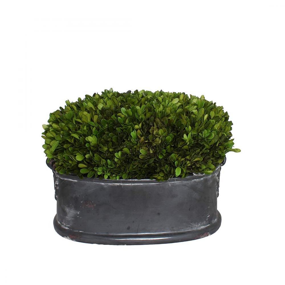 素敵なアイテムブリザードプランツ 枯れない観葉植物 インテリアグリーン 鉢植え トピアリー