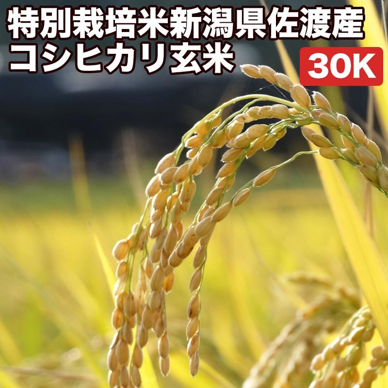 特別栽培米新潟県佐渡産コシヒカリ玄米30kgお米【選べる搗き方 白米・ハイガ米・玄米・8分つきなど】完全真空包装米(真空包装代 無料)長期保存・鮮度維持・カビ、害虫などの繁殖 防止に♪美味しいご飯。贈り物にも。
