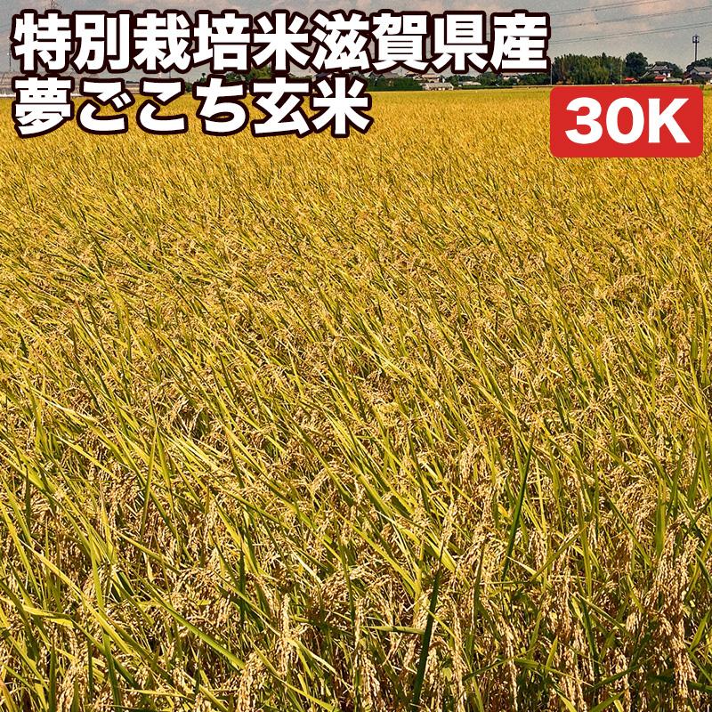 特別栽培米滋賀県産夢ごこち玄米30Kお米【選べる搗き方 白米・ハイガ米・玄米・8分つきなど】完全真空包装米(真空包装代 無料)長期保存・鮮度維持・カビ、害虫などの繁殖 防止に♪美味しいご飯。贈り物にも。