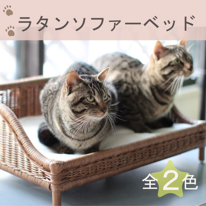 Pleasant I Show Cute All Rattan Sofa Bed Cat House Pet House Handmade Nature Material Bed Cat Bed Cat Rattan Cane Rattan Bed Cat Small Size Cushion Fashion Andrewgaddart Wooden Chair Designs For Living Room Andrewgaddartcom