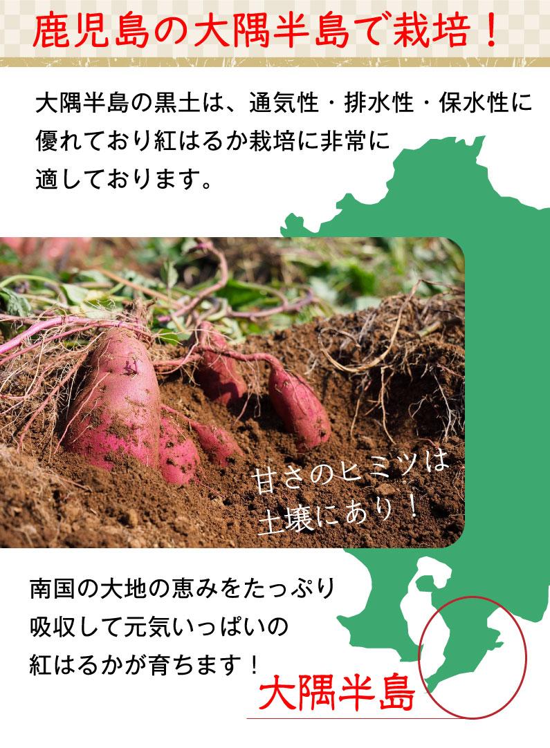 紅はるか 干し芋 鹿児島産 しっとり半生 紅はるか干しいも100g×2袋セット 安心安全 無添加 自然食品 保存料一切なし メール便
