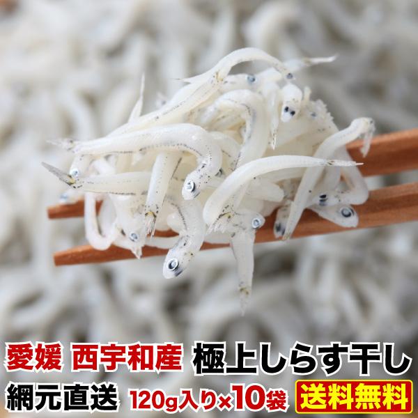 しらす しらす干し 1.2kg ギフト 築地市場御用達 網元直送 愛媛県産 極上しらす干し120g×10袋