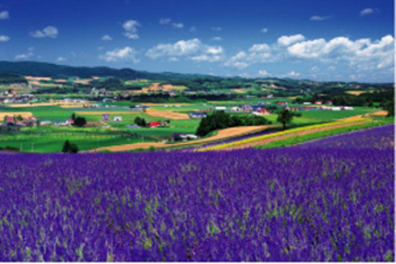 【引上品】1500スモールピースジグソーパズル ラベンダー咲く丘-富良野 《廃番商品》