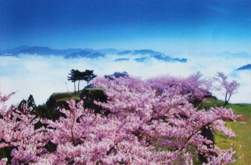 1000ピースジグソーパズル 桜咲く竹田城跡-兵庫 《カタログ落ち商品》