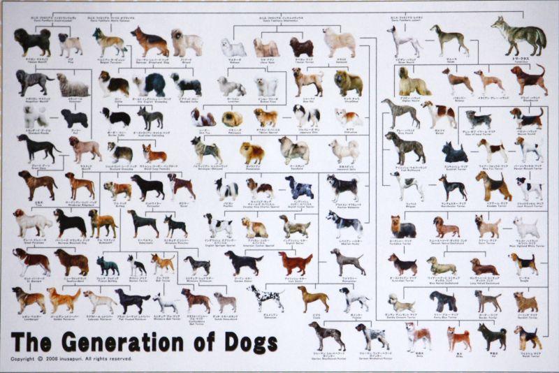1000ピースジグソーパズル 犬の系統図