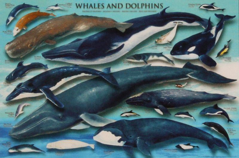 2542スーパースモールピースジグソーパズル イルカ・クジラコレクション 《廃番商品》