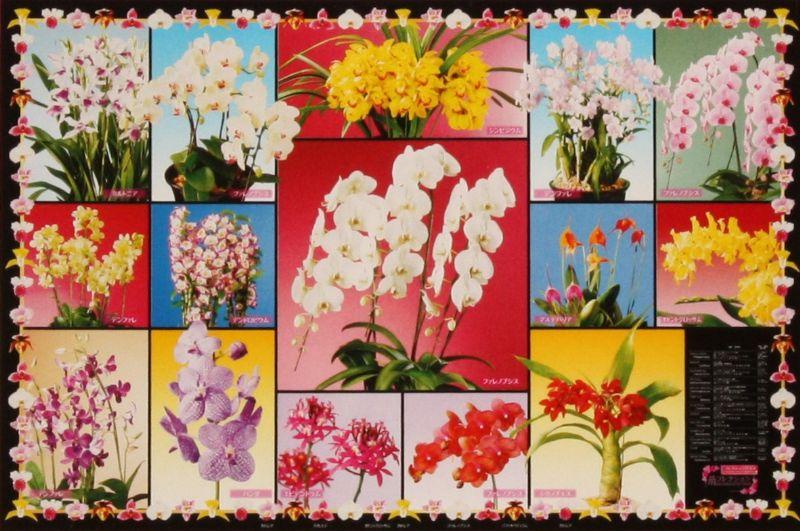 蘭コレクション 2542スーパースモールピースジグソーパズル 《廃番商品》