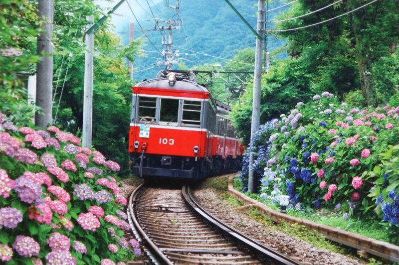 【引上品】2542スーパースモールピースジグソーパズル アジサイと箱根登山電車 《廃番商品》