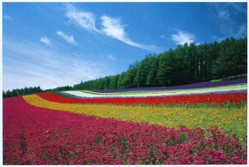 1000ピースジグソーパズル 富良野の花畑(北海道) 《廃番商品》