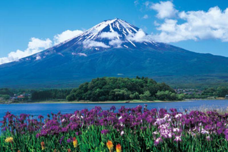 1000ピースジグソーパズル 菖蒲咲く富士-山梨- 《廃番商品》