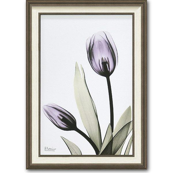 「チューリップ」X-RAY キャンバスアート [絵画通販]花 レントゲンアート アート【絵のある暮らし】【壁掛けフックつき】