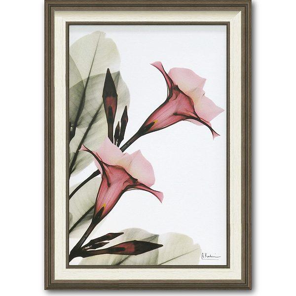 「トランペットフラワー」X-RAY キャンバスアート [絵画通販]花 レントゲンアート アート【絵のある暮らし】【壁掛けフックつき】