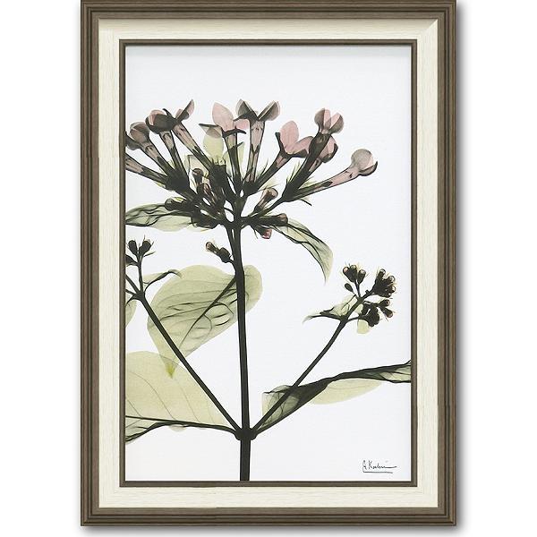 「ブバルディア」X-RAY キャンバスアート [絵画通販]花 レントゲンアート アート【絵のある暮らし】【壁掛けフックつき】