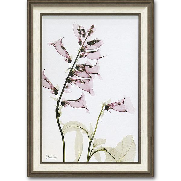 「サルビア」X-RAY キャンバスアート [絵画通販]花 レントゲンアート アート【絵のある暮らし】【壁掛けフックつき】
