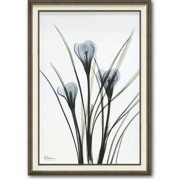 【代引不可】【お届け日時間指定不可】「クロッカス」X-RAY キャンバスアート [絵画通販]花 レントゲンアート アート【絵のある暮らし】【壁掛けフックつき】