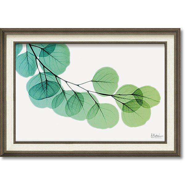 「ユーカリ」X-RAY キャンバスアート [絵画通販]花 レントゲンアート アート【絵のある暮らし】【壁掛けフックつき】