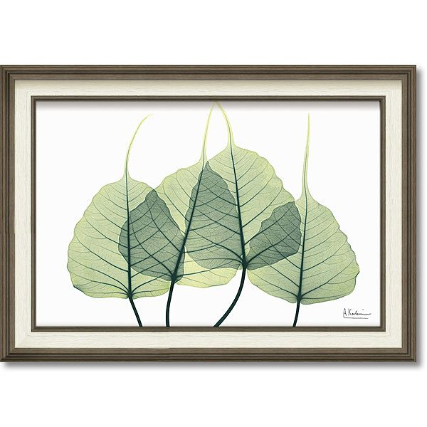 「リーフ3」X-RAY キャンバスアート [絵画通販]花 レントゲンアート アート【絵のある暮らし】【壁掛けフックつき】