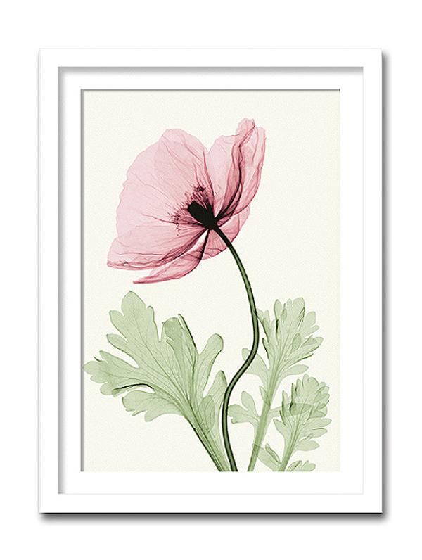 「Iceland Poppy2」【X-ray Photograph】Steven N.Meyers(エックスレイ フォトグラフ インテリアアートフレーム)[絵画通販]【絵のある暮らし】【壁掛けフックつき】