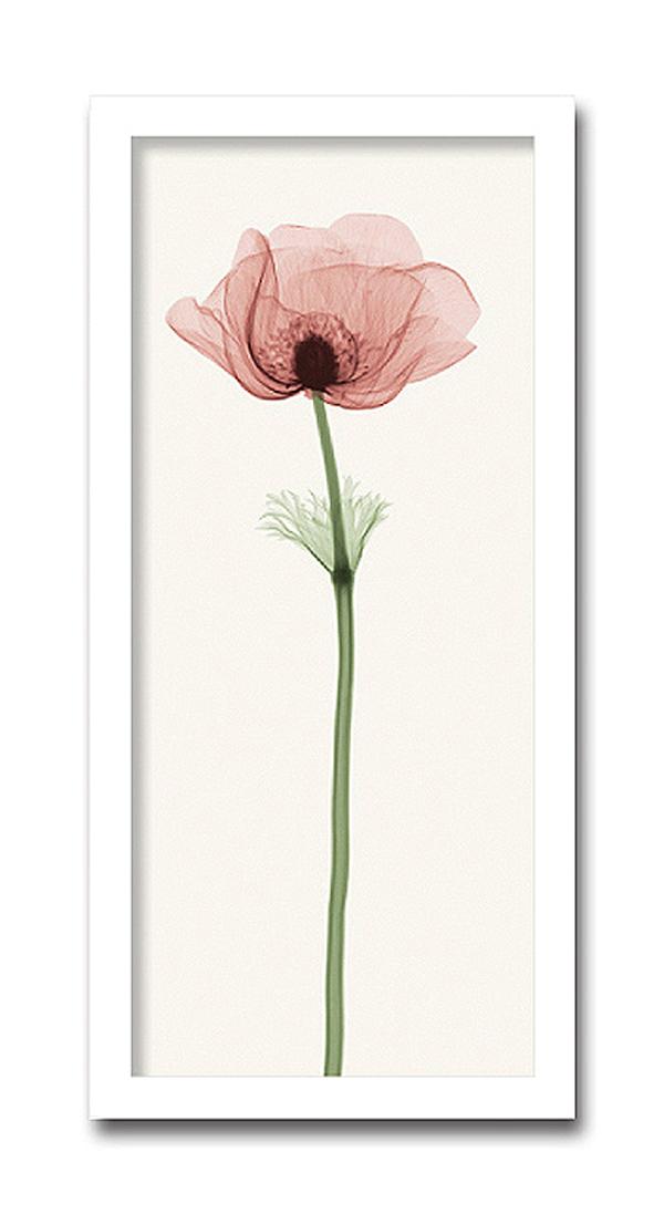 「Anemone4」【X-ray Photograph】Steven N.Meyers(エックスレイ フォトグラフ インテリアアートフレーム)[絵画通販]【絵のある暮らし】【壁掛けフックつき】