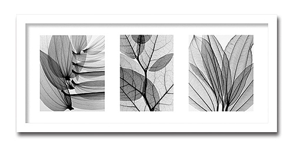 「Leaf Collection」【X-ray Photograph】Steven N.Meyers(エックスレイ フォトグラフ インテリアアートフレーム)[絵画通販]【絵のある暮らし】【壁掛けフックつき】