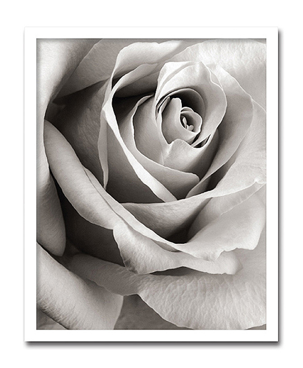 【代引き不可】「Rose」【X-ray Photograph】Steven N.Meyers(エックスレイ フォトグラフ インテリアアートフレーム)[絵画通販]【絵のある暮らし】【壁掛けフックつき】