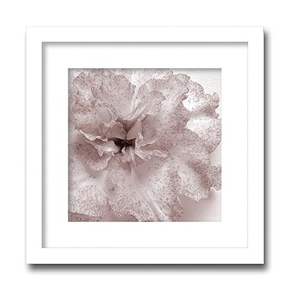 「Jk driggs/Blossom(one)」(フォトグラフ インテリアアートフレーム)[絵画通販]【絵のある暮らし】【壁掛けフック