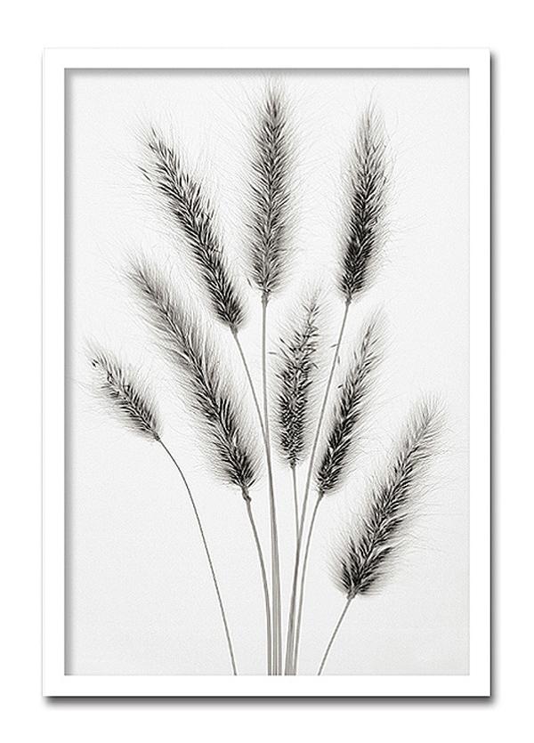 【代引き不可】「Hare's Tail」【X-ray Photograph】Steven N.Meyers(エックスレイ フォトグラフ インテリアアートフレーム)[絵画通販]【絵のある暮らし】【壁掛けフックつき