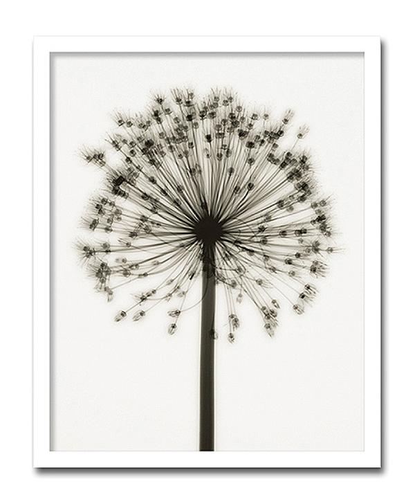 【代引き不可】「Allium」【X-ray Photograph】Steven N.Meyers(エックスレイ フォトグラフ インテリアアートフレーム)[絵画通販]【絵のある暮らし】【壁掛けフックつき】