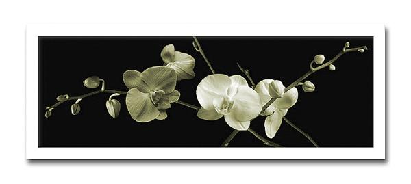 Jk driggs/Orchid Sprays2(フォトグラフ インテリアアートフレーム)[絵画通販]【絵のある暮らし】【壁掛けフックつき】