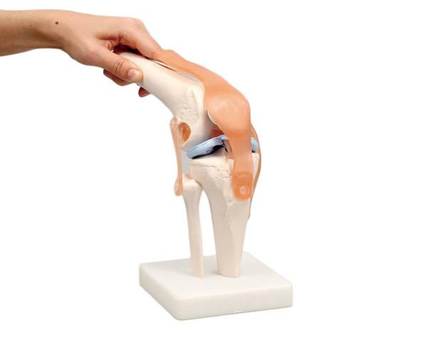 9704 膝関節模型【アーテック】