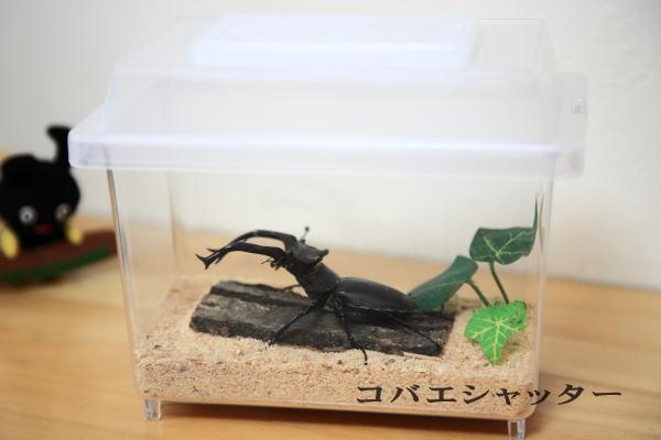 いやなコバエは立ち入り禁止 昆虫飼育ケース プレゼント コバエシャッター蓋 ケース ミニ [宅送] カブト飼育を安心して楽しむことが出来る万能昆虫ケース クワガタ 保湿効果もあり いやなコバエをピッタリシャット