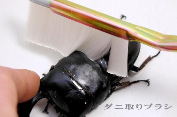 定番スタイル 驚くほど簡単 きれいにダニが取れる 当店オリジナルの自信作 ダニ取りブラシ WEB限定 ダニ対策に