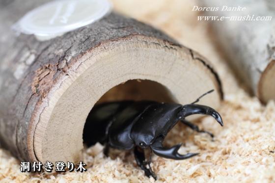 ゼリーも装着でき 日本最大級の品揃え ムシ君たちもお気に入り 即納 洞付き登り木 トンネル型 クワガタが隠れることが出来る洞付き登り木 昆虫ゼリーも入るお奨めグッズ