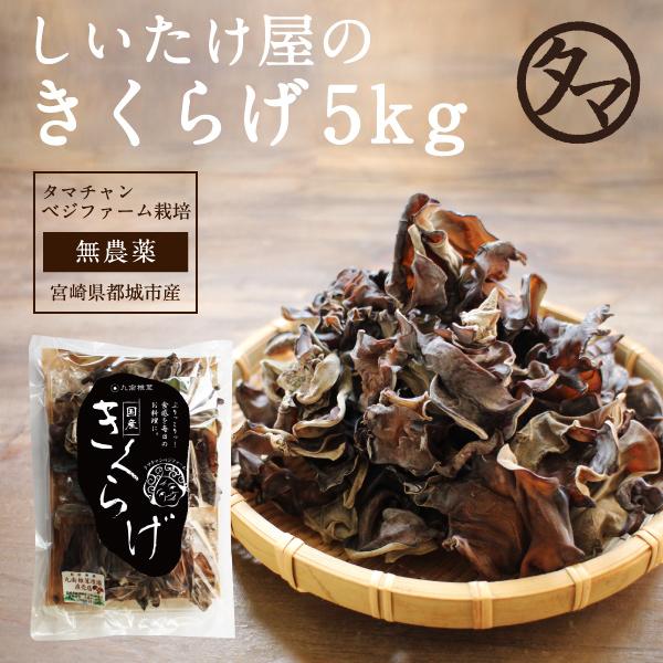 九州産 キクラゲサムネイル05