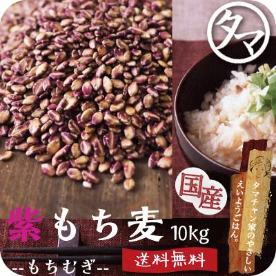 【送料無料】超希少な紫もち麦10kg(九州産/29年度産)紫が濃い状態で収穫したもち麦です。もち麦に比べてポリフェノールの1種、アントシアニジンを多く含み、より一層もちもちぷちぷちの食感が楽しめます【国産 もち麦/無添加/ダイシモチ/モチムギ】