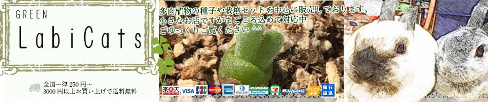 ぐり〜んしょっぷ LabiCats:主に多肉植物の種子を取り扱っております。珍しい種がみつかるかも^^